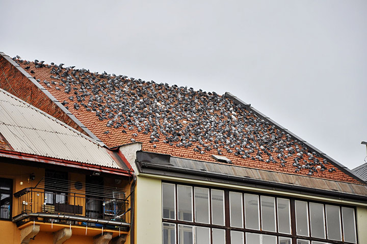 A2B Pest Control are able to install spikes to deter birds from roofs in Shadwell.