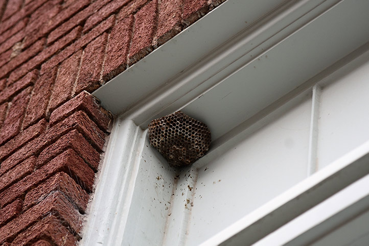 We provide a wasp nest removal service for domestic and commercial properties in Shadwell.